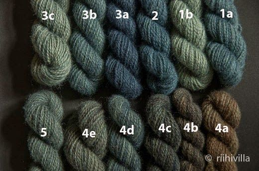 Riihivilla, Dyeing with natural dyes: Sarcodon squamosus this autumn Männynsuomuorakasvärjäys tänä syksynä