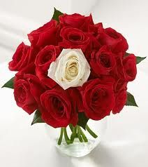 valentine single red rose