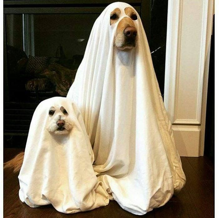 263 best Dogs in Costume & Clothes images on Pinterest ...