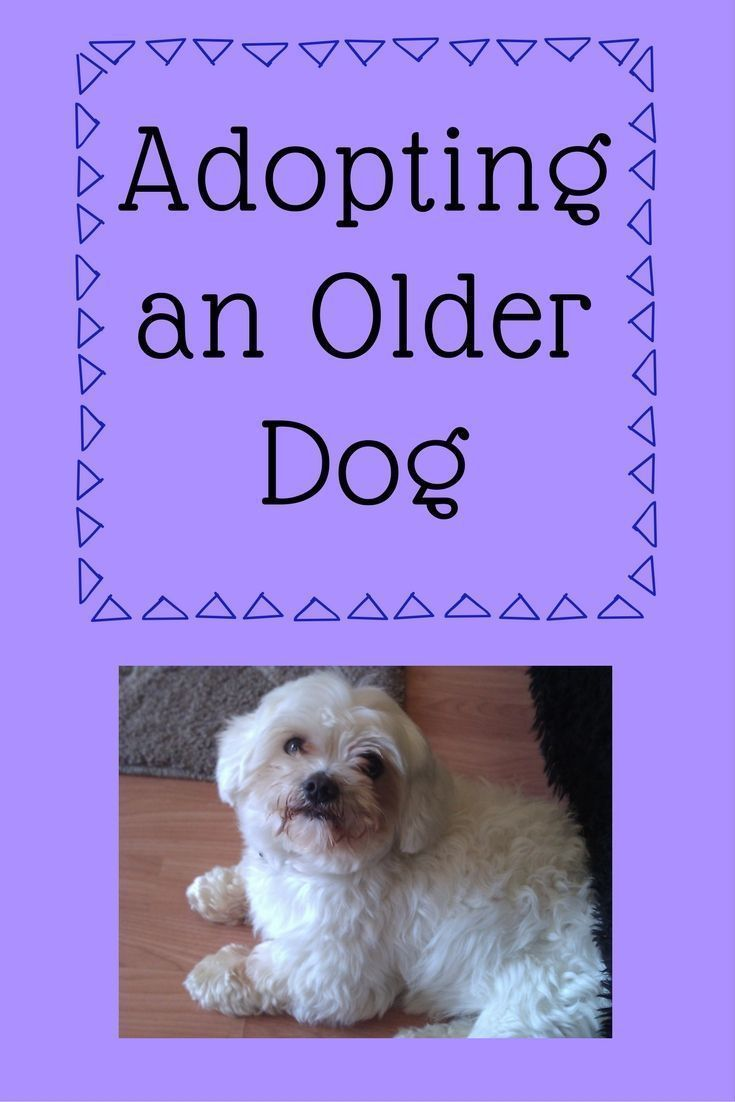 Older Dogs In Rescue Don T Overlook The Golden Oldies Dogs