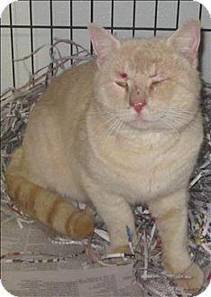 Cat Adoption Dallas Ga