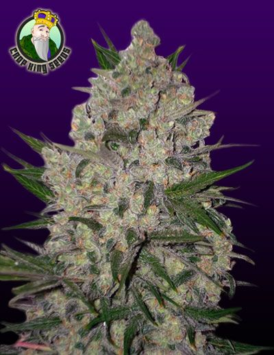 Zeus – Regular Seeds