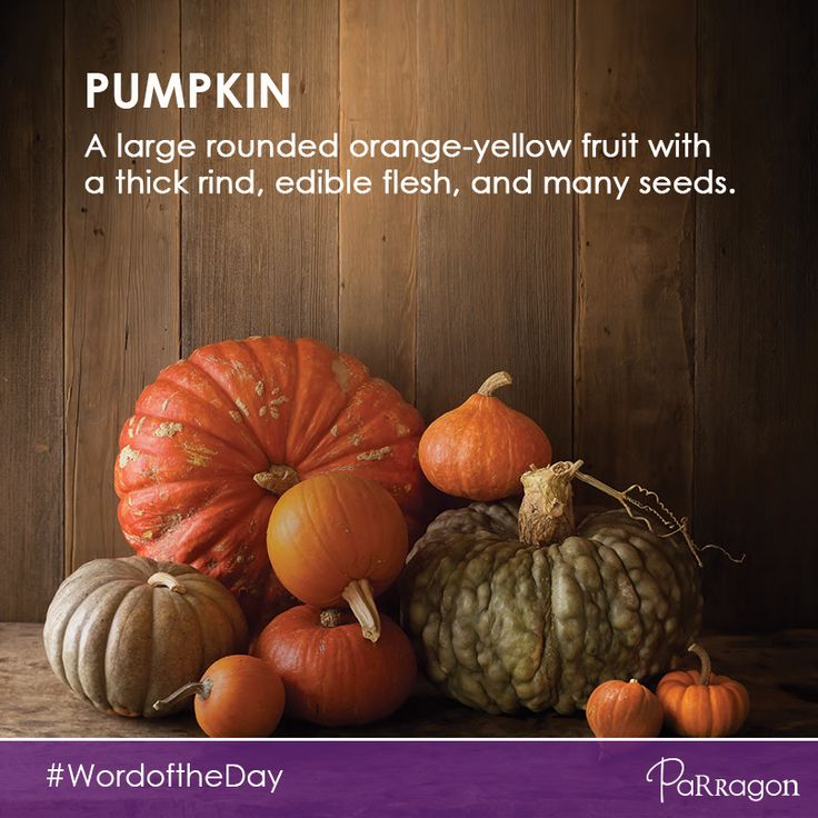 Today our #wordoftheday for the little ones is: pumpkin!   We can't believe it's almost pumpkin season again! Are you enjoying a cup of pumpkin spice latte?