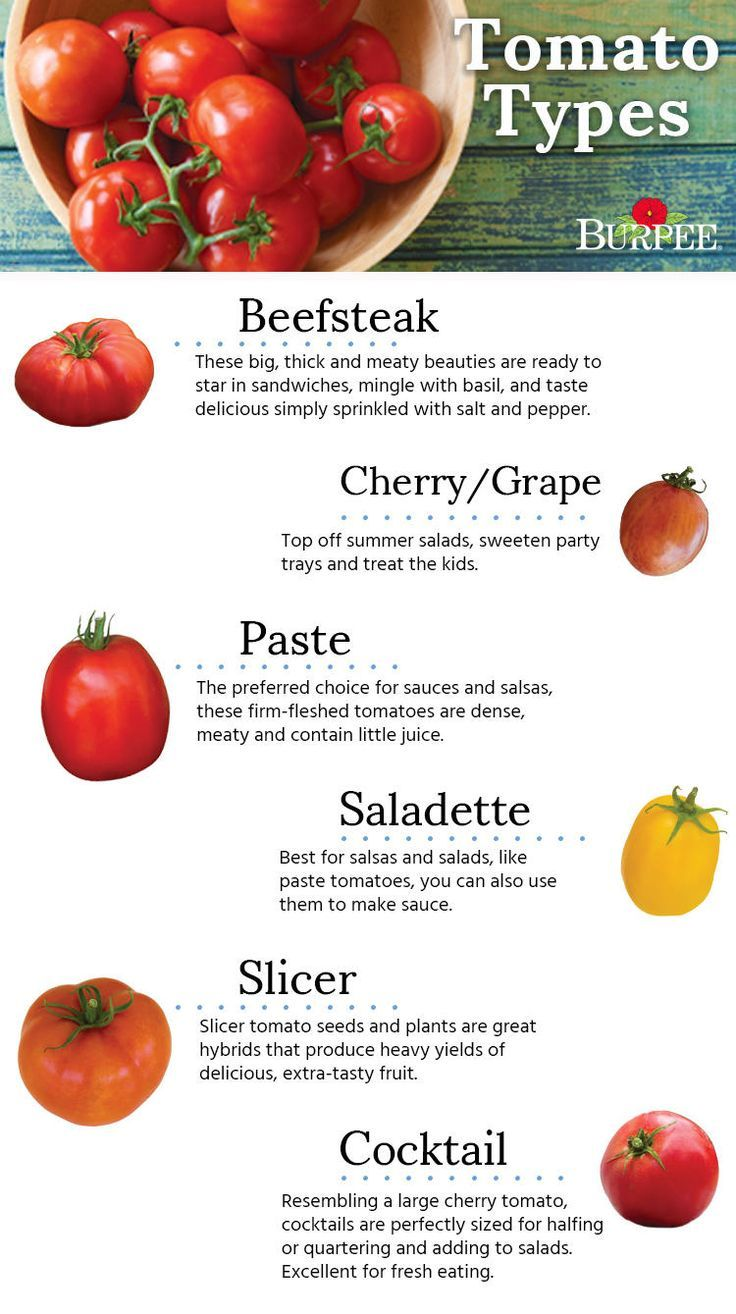 Image result for tomato types