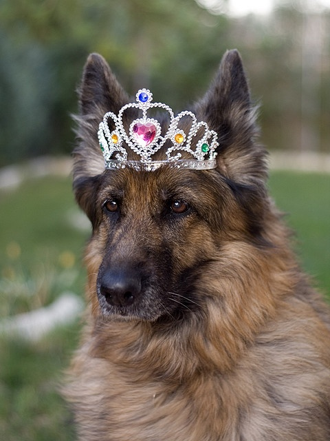 Princess Kira..she sure is  #GSD
