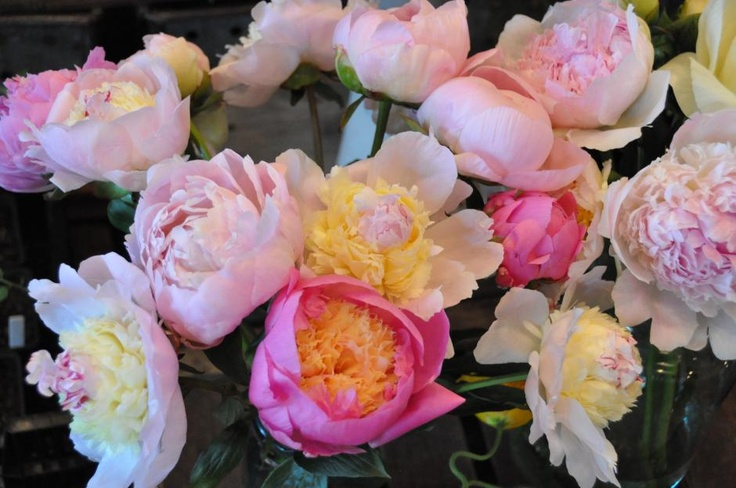 Notes from a Flower Farm: Peonies and Garden Roses | Garden Design
