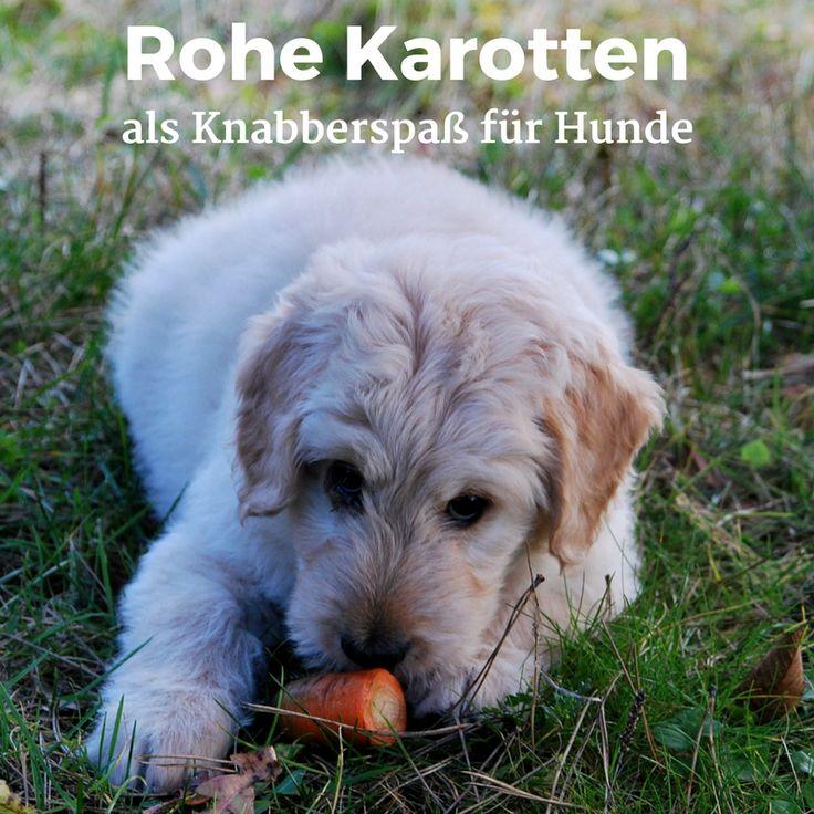 #Möhren als gesunder Knabberspaß gegen #Würmer beim #Hund