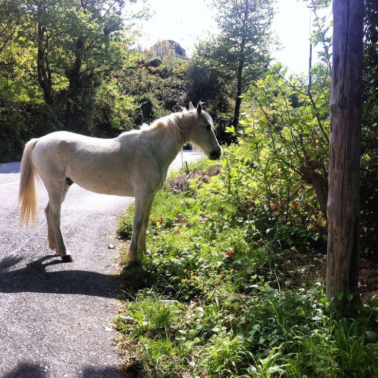 Horse riding - Pelion - Greece
