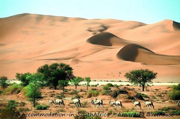 Beautiful Namib dunes. Amarachi Guesthouse. http://www.accommodation-in-southafrica.co.za/Namibia/Swakopmund/AmarachiGuesthouse.aspx