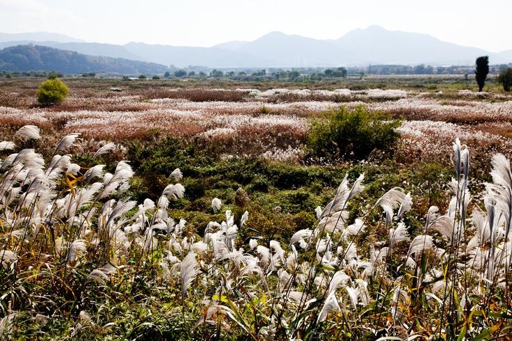 Daegu, Nakdong river Dalsung wetlands