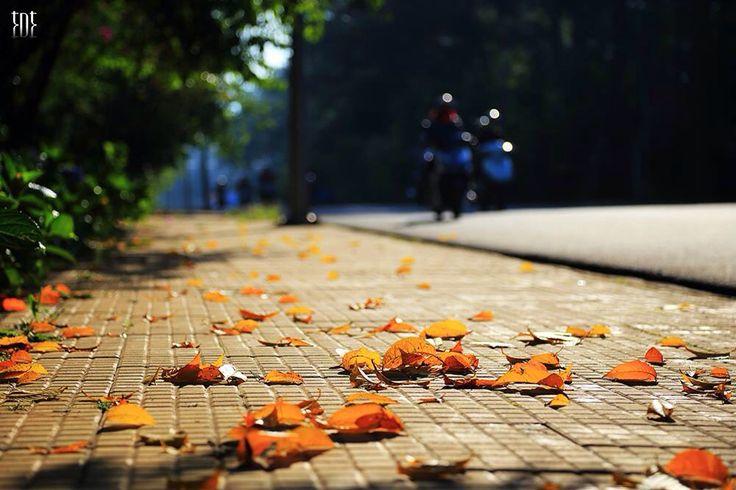 Thu về Không có những con đường lá đổ vàng rực, nhưng mùa này ở Đà Lạt vẫn thấy thấp thoáng đâu đó bóng dáng nàng thu đang e ấp.