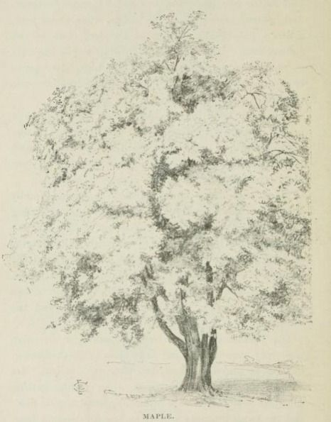 16 best art sketchbook concentration trees images on pinterest pen drawing from the frontispiece of the public domain ebook trees and tree drawing by edward c clifford fandeluxe Gallery