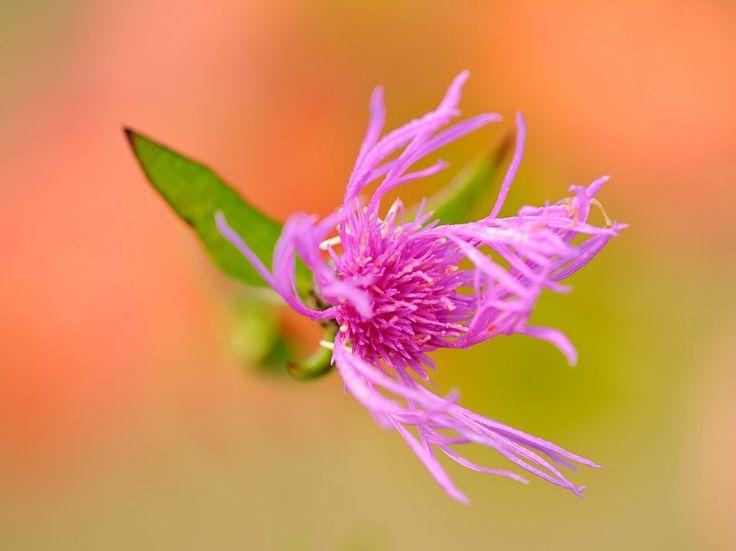 Fiore novembrino