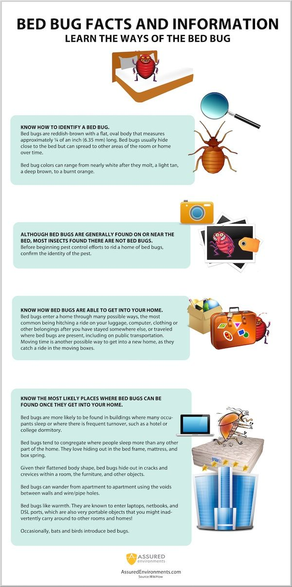 Pin On Bed Bug Infographic