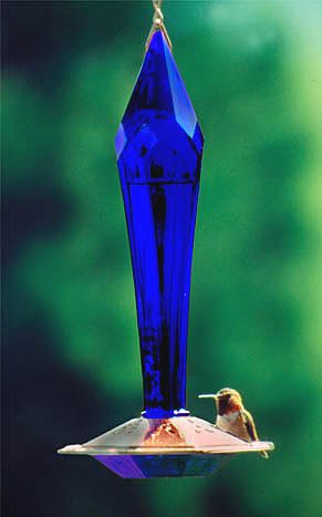 cobalt blue hummingbird feeder - what a thing to put in the garden!