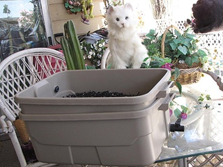Envirokats Double Box System (uses ground tires for litter. Good for the environment and safe for your cat. Scoop out solid waste and drain out the liquid waste rinse litter with water at min once a week. Dont have to replace litter or top up very often good for the pocket book in the long run.