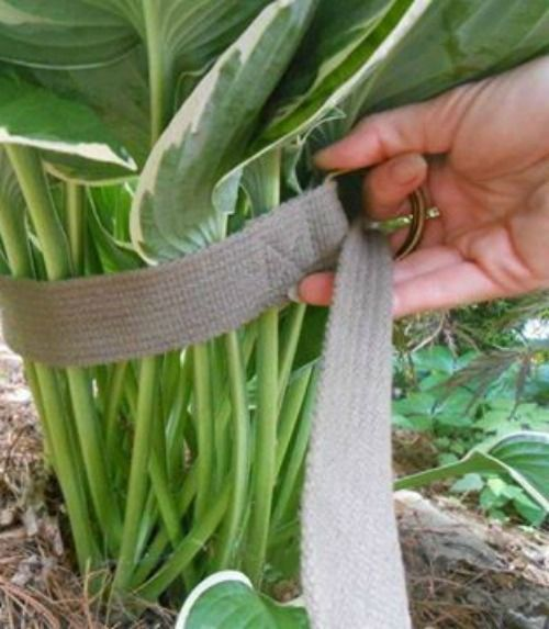 Get ready - you're about to become a Hosta expert! #diy #gardening #outdoors