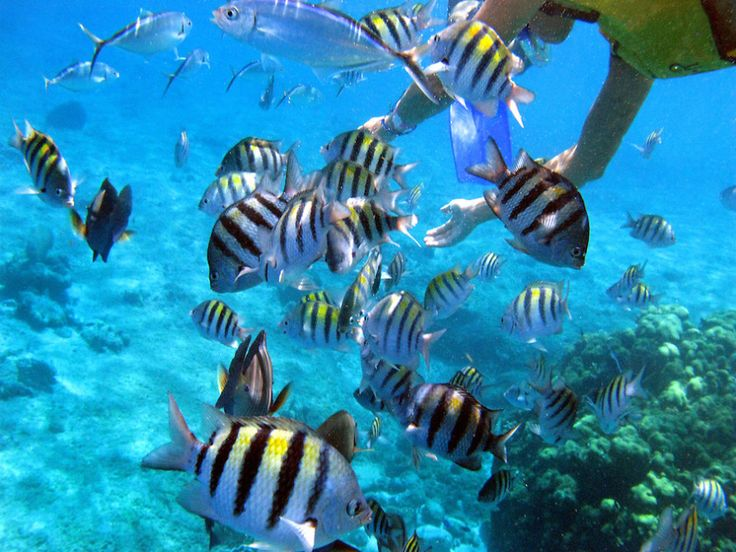 Cozumel Snorkel #RSV_Travel @ www.ReadySetVacation.com