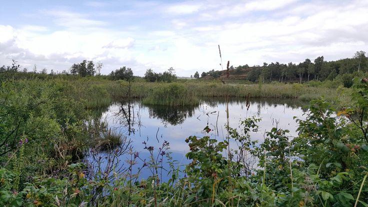 Biotop langs Hærvejen