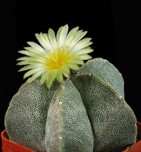 Sukkulenten zu hause zu haben ist doch eine sch ne deko for Pflanzen zu hause