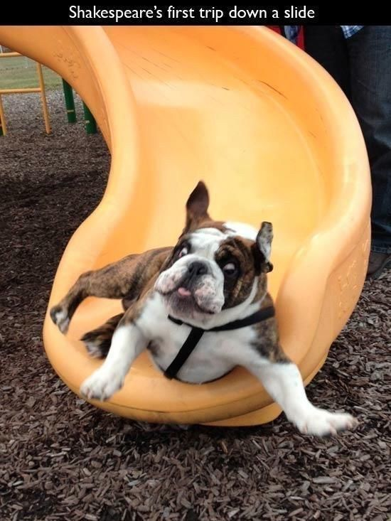 The Sliding Shakespeare | The 100 Most Important Dog Photos Of All Time