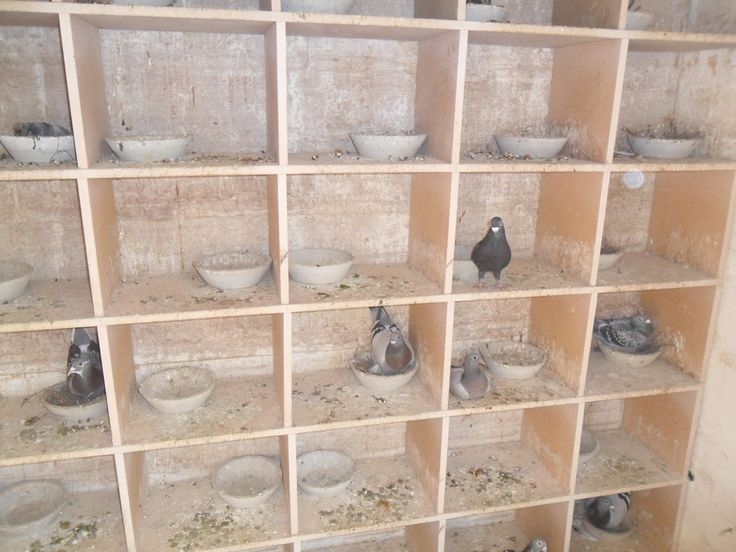 pigeon lofts | This inside our racing loft. Sections 1 & 2.