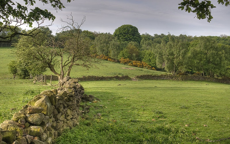 I can't but wonder where are the sheep? I want to run through the field singing like Julie Andrews..lol. Derbyshire Landscape
