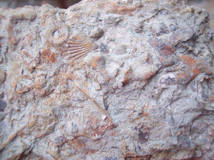sedimentary rocks and fossils relationship quiz