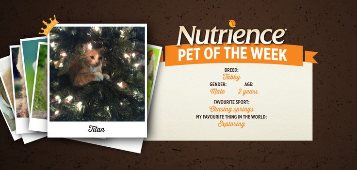 Titan loves exploring and that's why he's this week's Nutrience Pet Of The Week! Submit yours here: http://bit.ly/PetOfWeek