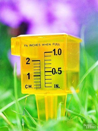 Засухоустойчивые растения и водосберегающие технологии
