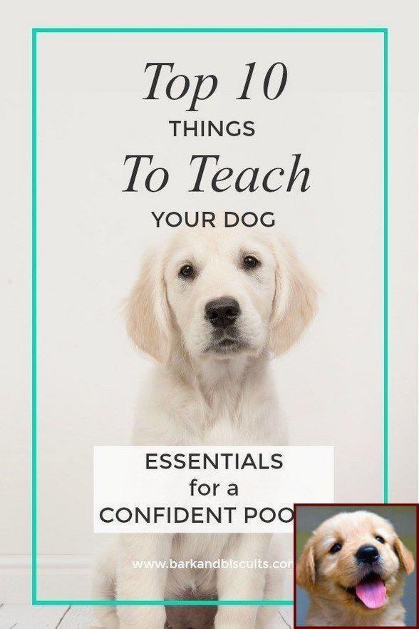 Aggressive Dog Behavior Towards Strangers And Dog Training Classes