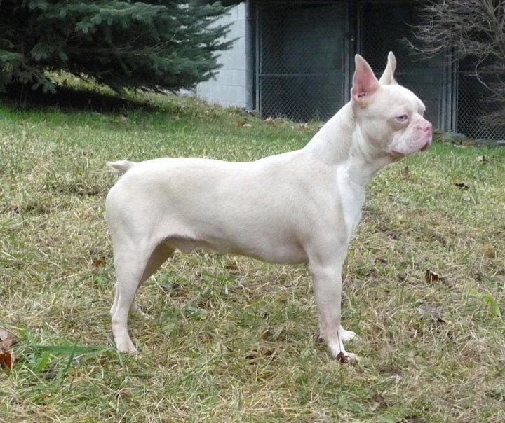 27 Best Images About Albino Dogs On Pinterest