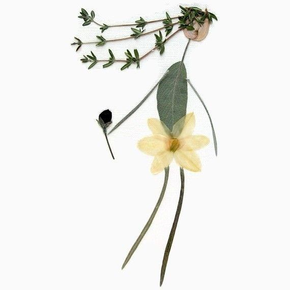 20 besten herbarium herbarbeleg herbar kr uter bilder auf pinterest gesundheit vorlage und. Black Bedroom Furniture Sets. Home Design Ideas