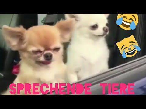 Youtube Tiere Lustig