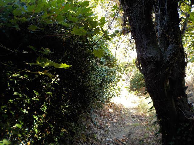 Crete Nature Blog: Steve's Nature Quiz #23 (scheduled via http://www.tailwindapp.com?utm_source=pinterest&utm_medium=twpin)