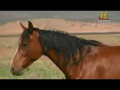 Maravillas modernas - El caballo (Documentales XXI)