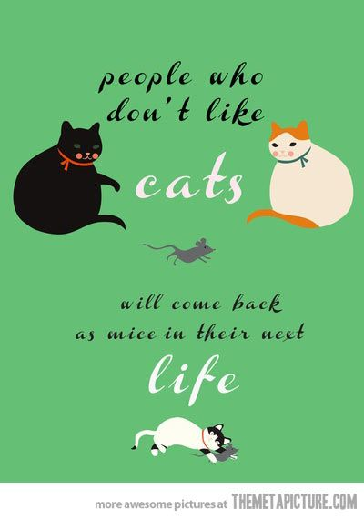 People who don't like cats…