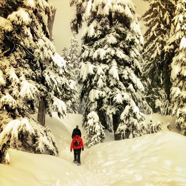 Mount Seymour, Snowshoeing, Vancouver, BC  photography by NikNaz K: Beautiful British, Bucket List, Winter Fun, Mount Seymour, North Shore, Beautiful Bc, Shore Mountains, British Columbia