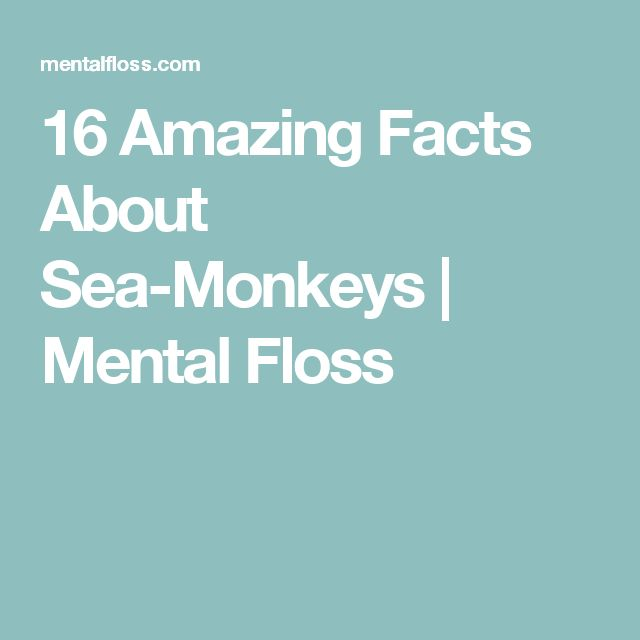 16 Amazing Facts About Sea-Monkeys | Mental Floss