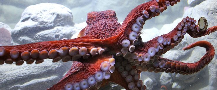 The New England Aquarium has a whole new look – online. Check out the terrific new website: www.neaq.org.