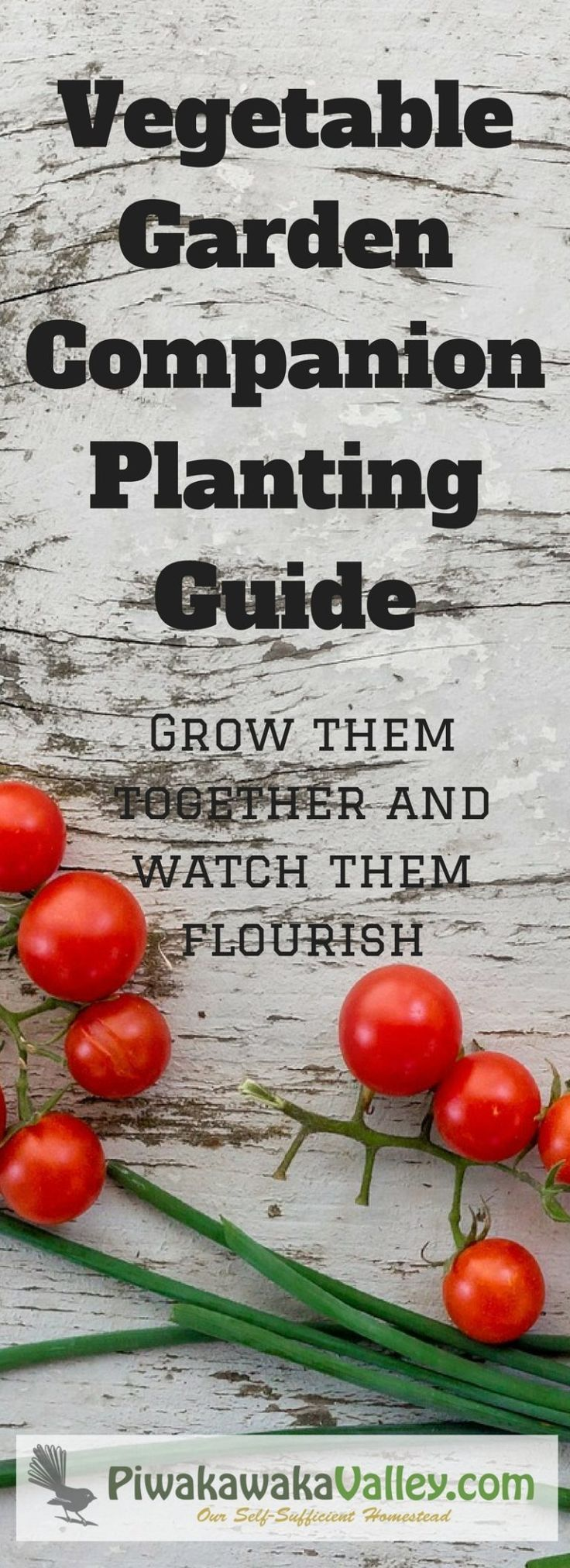 Companion Planting can be a confusing business. It takes a while to get your head around companion plant combinations that work and don't work together. Some plants work better with others and some are a terrible combination and they both struggle. Here a