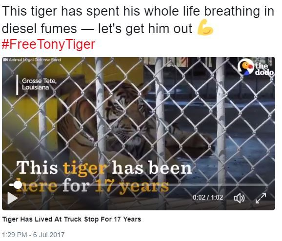 Tony, the Truck Stop Tiger, UpdateAs you know we've been following Tony the truck stop tiger in LA; it looks like the ALDF is pushing for a judgement in the lawsuit involving Michael Sandlin's special ownership to keep Tony. Since Tony's health is failing, they've expedited the hearing to start today.Right now the ALDF is just hoping to raise enough public outcry that officials see where the majority stands.Here are the Facebook and Twitter links:https://www.facebook.com/DodoImpact/video
