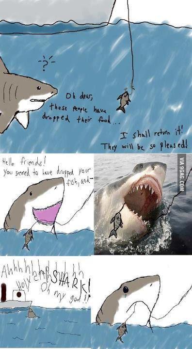 Poor Misunderstood Shark.