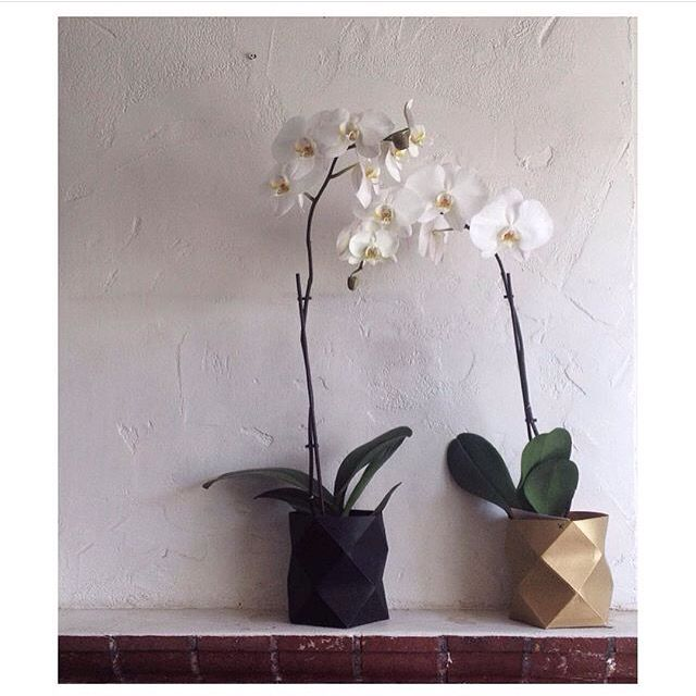 G E O  B U C K E T   Yay we have black still available woohoo! SHOP   http://daisychainstore.com.au/products/kates-moss-studio-geo-bucket-black Love this image by the creator @leafstreet_ and jealous that my orchid is dying