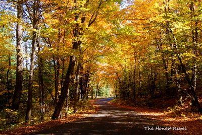 Fall Colours near Bancroft Ontario- Phot by The Honest Rebel along Faraday Road www.thehonestrebel.com