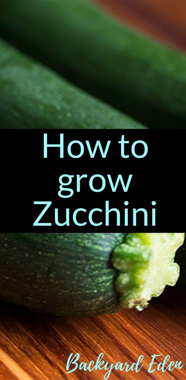 Pin On Vertical Herb Garden Backyard garden how to zucchini