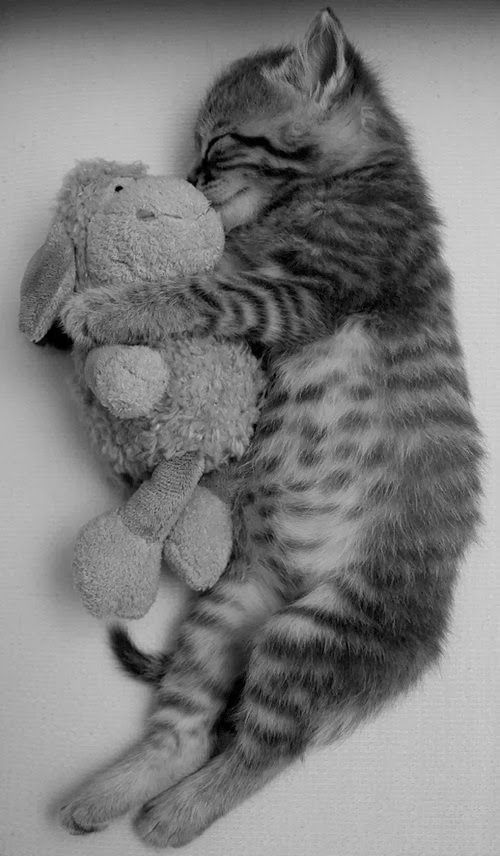 My cat has a stuffie giraffe and she used to clean its tail. This reminds me of that