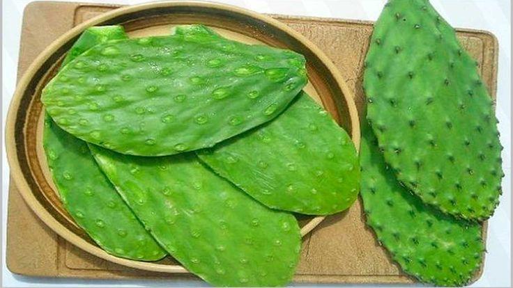 El nopal es una planta perteneciente a la familia de los cactus que crece generalmente en los países americanos, aunque por su capacidad de adaptación ha