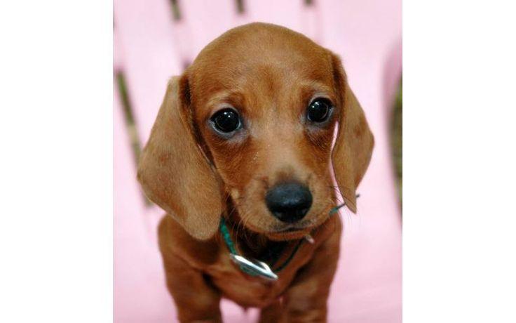 dotson puppies - Google Search