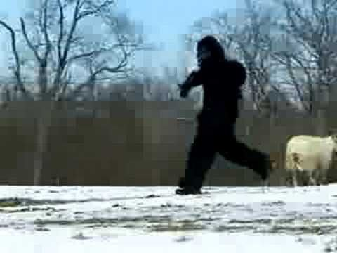 THE WORLD'S MOST SHOCKING BIGFOOT VIDEOS - 2 - YouTube